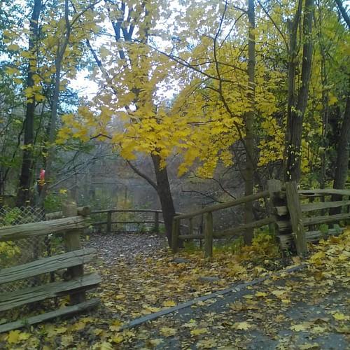 Pond #toronto #riverdaleparkwest #riverdalepark #autumn