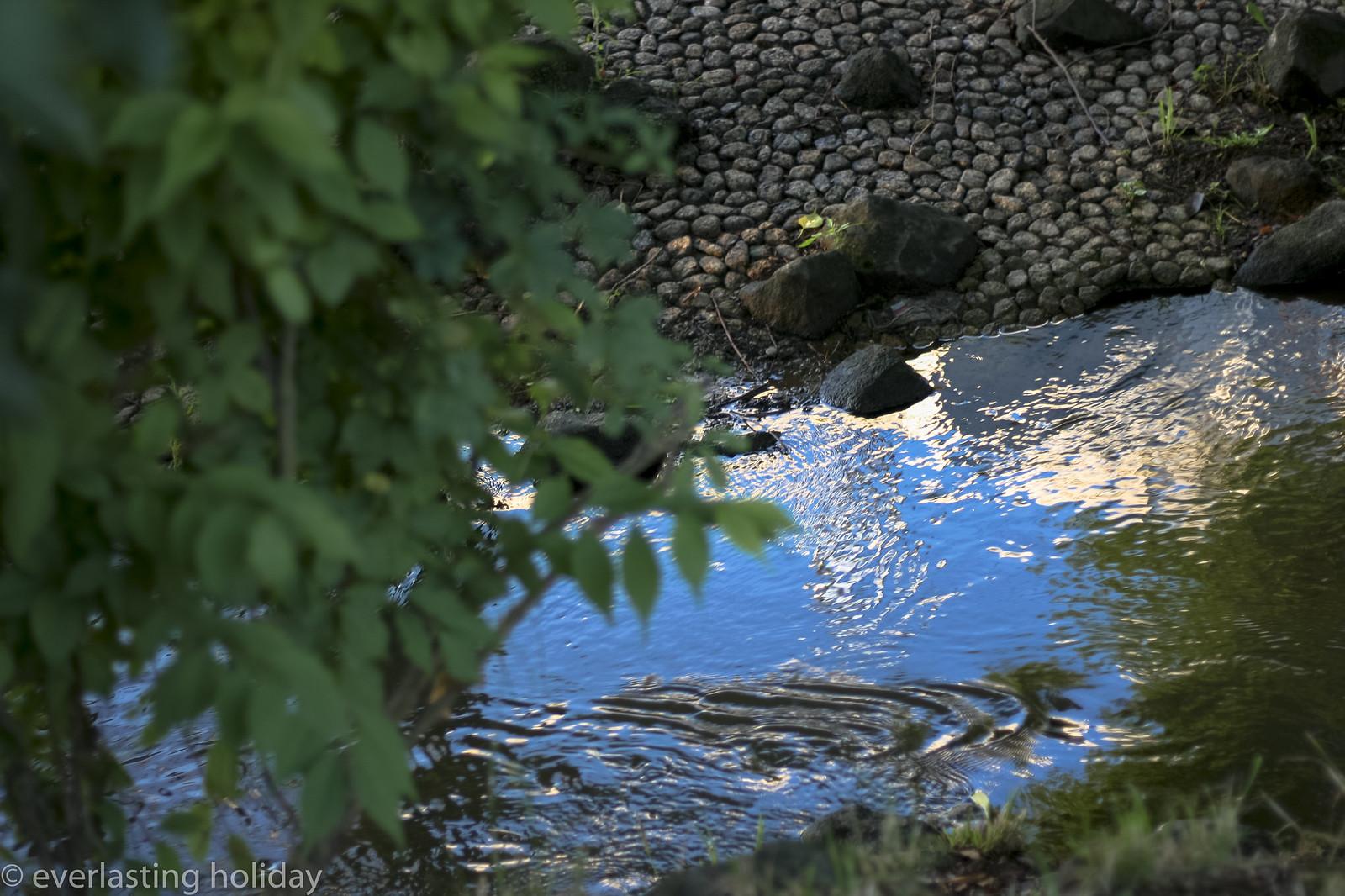 水面 - み・な・も surface of water