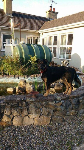 [Updated] Tue, Dec 6th, 2016 Lost Male Dog - Cahir, Ballydrehid, Tipperary