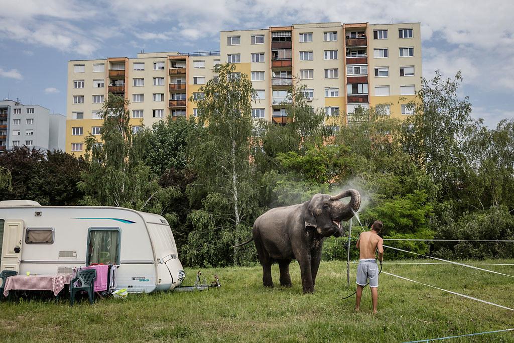 Kállai Márton (Szabad Föld): Elefántfürdő (Művészet egyedi, 1. díj)