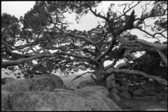 Wichita Mountains Wildlife Refuge 880