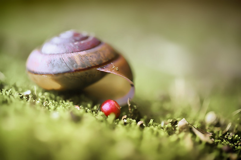 an ant and a snail shell