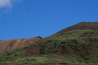 066 Uitzicht Denali NP