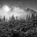 Sunlight and Fog by Mark Griffith