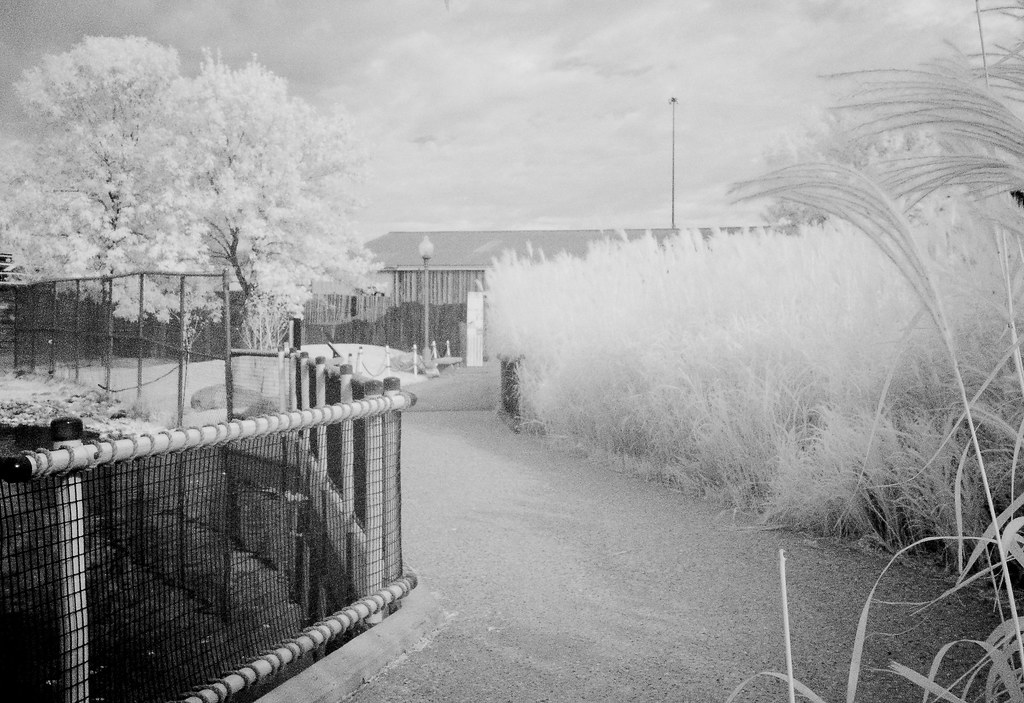 Infrared River Zoo_2