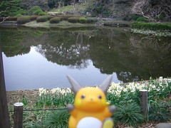 Raichu in Kojimachi, Tokyo 25 (The East Gardens of the Imperial Palace)