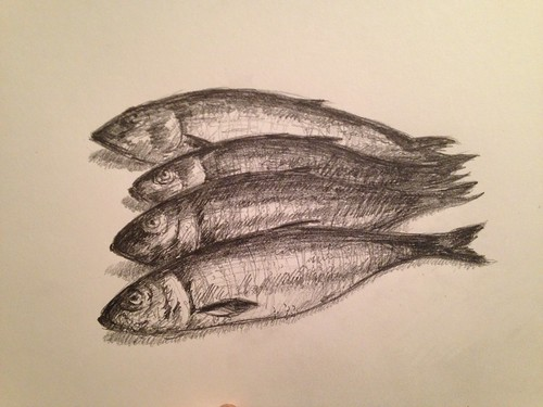 I think they are herring. Working in pencil for a change of pace. Not sure I've done a pencil sketch in maybe ten years.