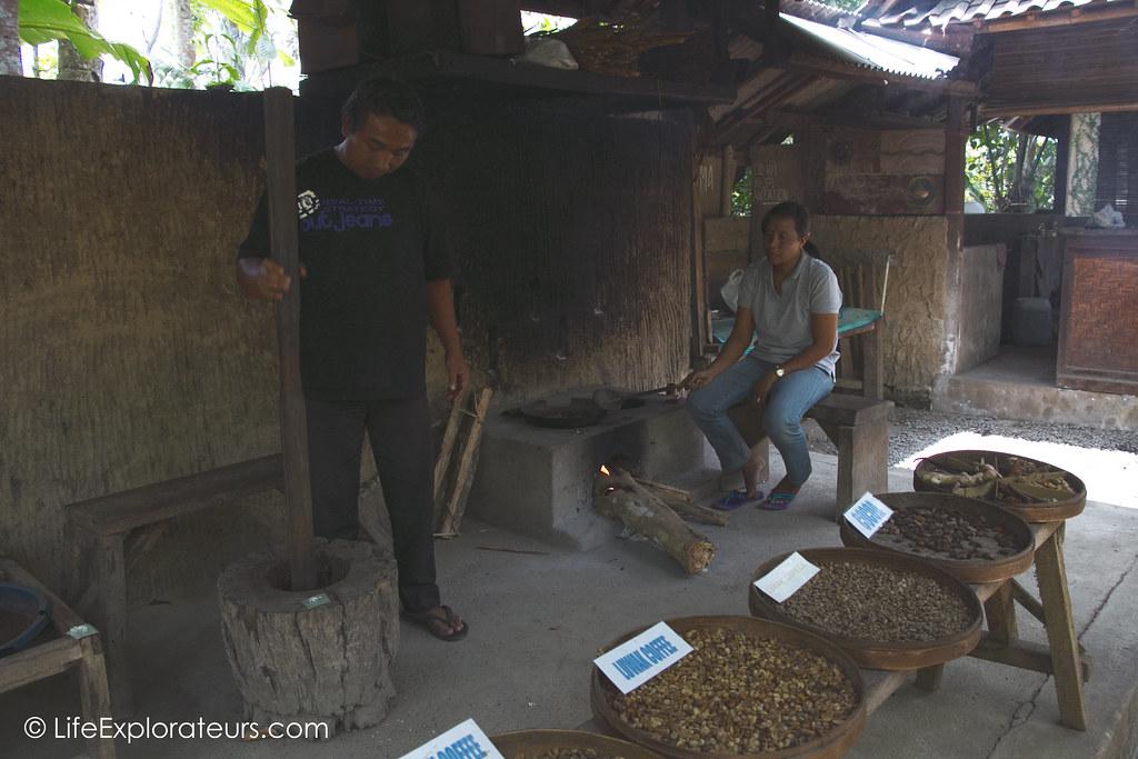 Luwak-coffee-Bali