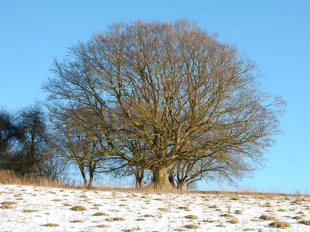 Nice tree Lenham to Charing