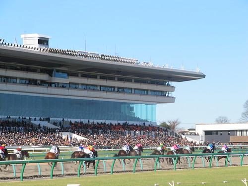 中山競馬場の内馬場から見たダートレース