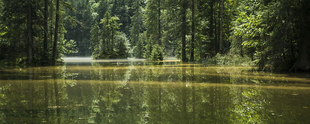Photo:August Green 8月の緑 By Patrick Vierthaler
