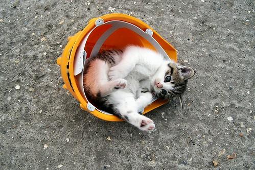 uk hardhat england cats hat yellow cat kitten unitedkingdom norfolk kittens drseuss catinthehat geronimo kodakz740 views200 wereham vicsf49