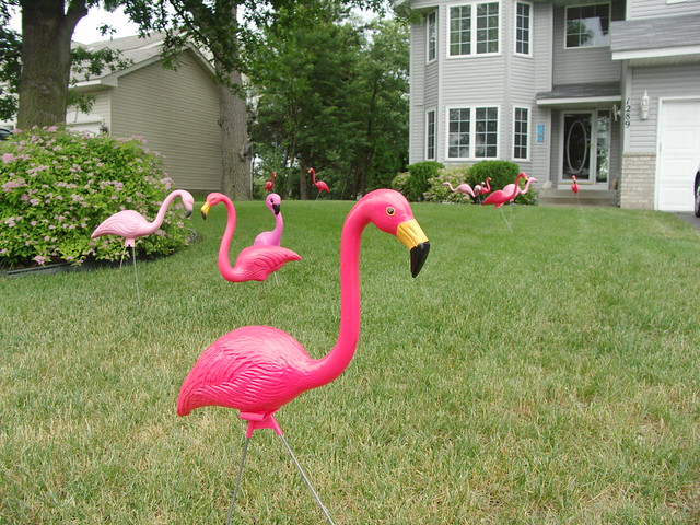 flamingos flickr photo sharing