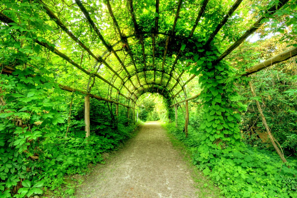 Plant Tunnel Flickr Photo Sharing