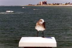 Florida, August 1999