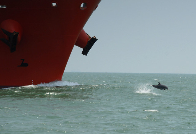 Ship and Porpoise