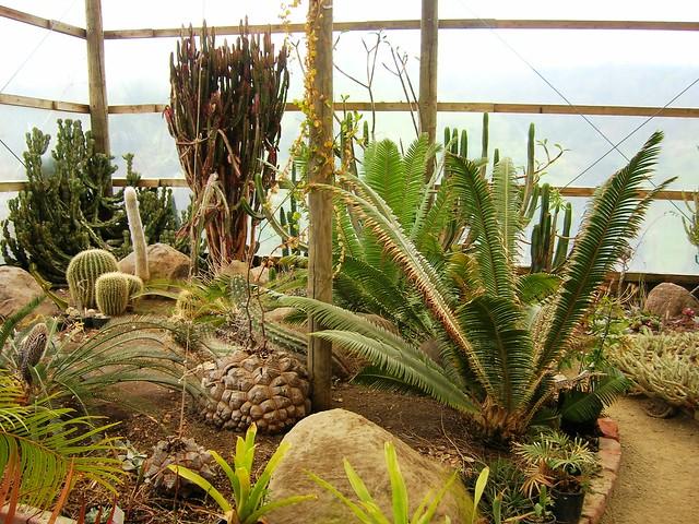 In the greenhouse - Paloma gardens | Dioscorea elephantipes ...
