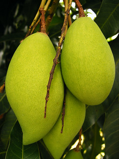 Mango & its Spiritual Significance