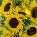 Sunflowers by derbokon