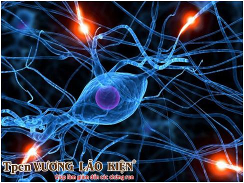 Phát triển tế bào gốc - Nghiên cứu điều trị bệnh Parkinson