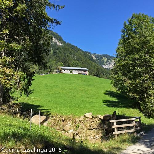 Mellau Alp Buchen Alpblick