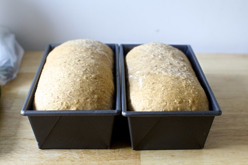 oat and wheat sandwich bread, ready to bake