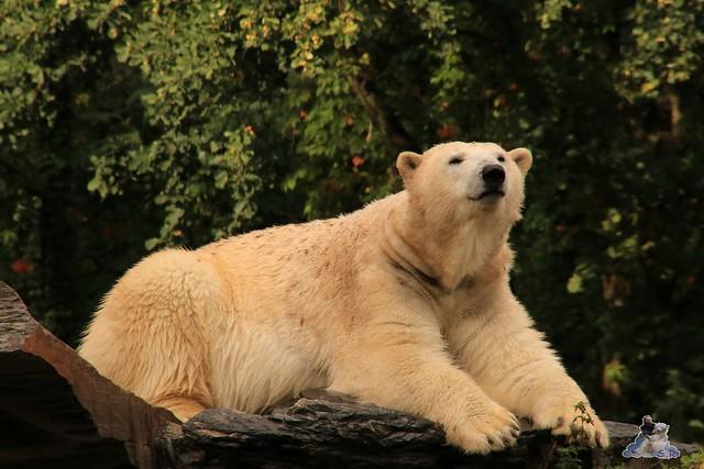 Tierpark Berlin 20.09.2015  0229