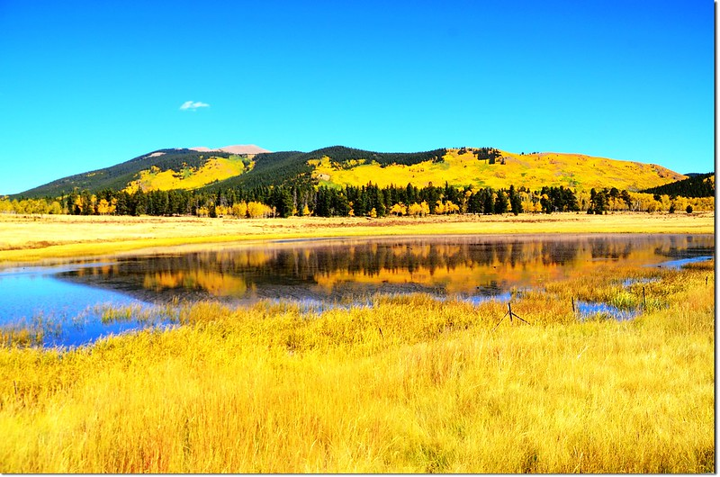 Fall colors at Kenosha Pass, Colorado (40)