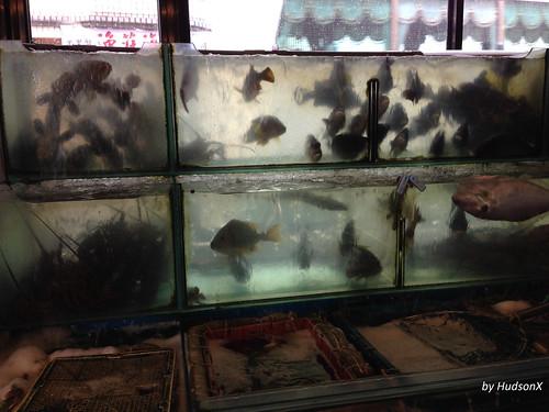 活海鮮魚缸