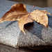Brown Leaf on Fountain Stone Edge by Orbmiser