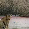 Morning Street cat 1