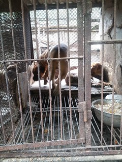 """Hell Hole"" Dog farm/slaughterhouse in Yongdang-dong, Yangsan, South Korea."