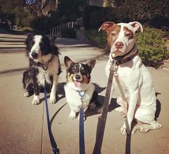 Ridley, Austin & Jake