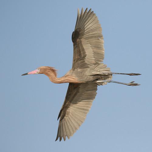 wildlife birds tierra verde fl bfi