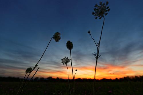 hudsonvalley sunset landscape dof depthoffield silhouette 7dwf aleadam alejandroadam