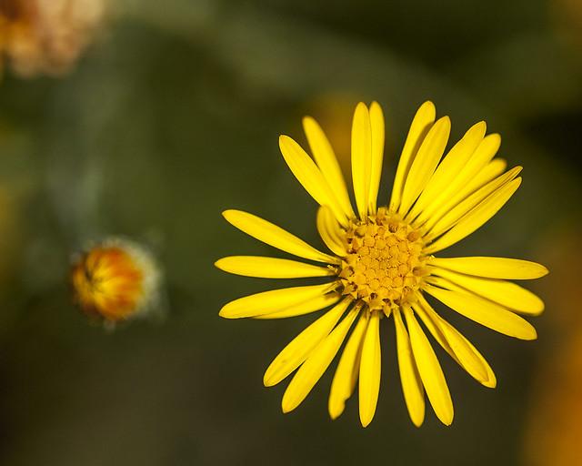 Wild flower 20d_2499