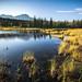 Wetland Shimmer by Darren Umbsaar