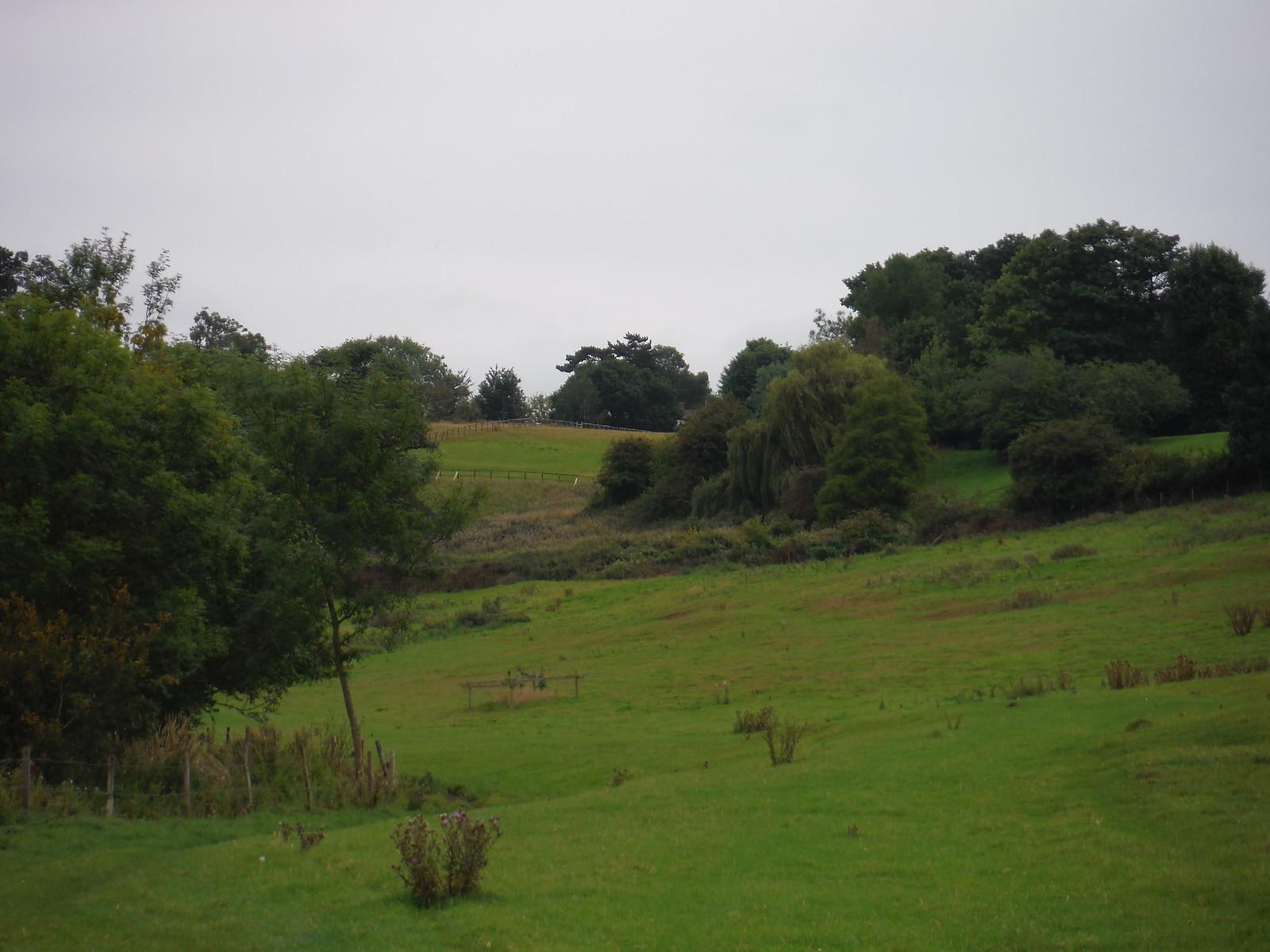 Lilley's Wood, Ash Valley SWC Walk 164 Roydon to Sawbridgeworth via Henry Moore Foundation