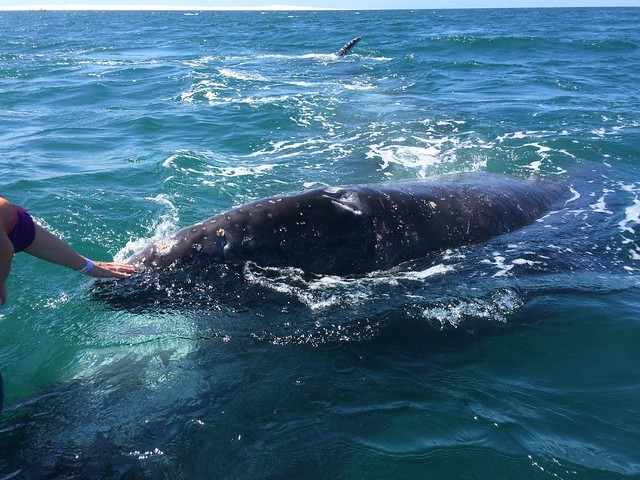 Baja 1159, Part 2 - Now with baby whales! March 10 - 16, 2015.