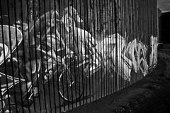 Paco Cyclist_2