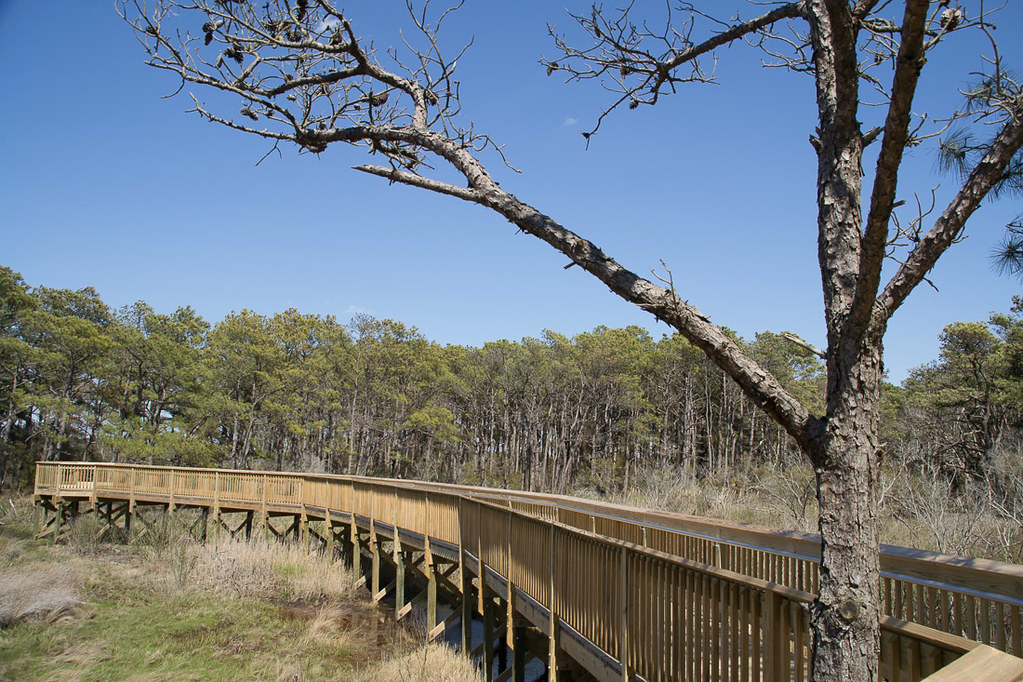 Life of the Forest Trail at Assateague National Seashore