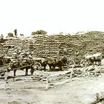 Wheat-Stack-1917