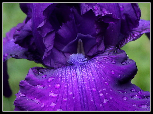 Iris Master Touch (3)