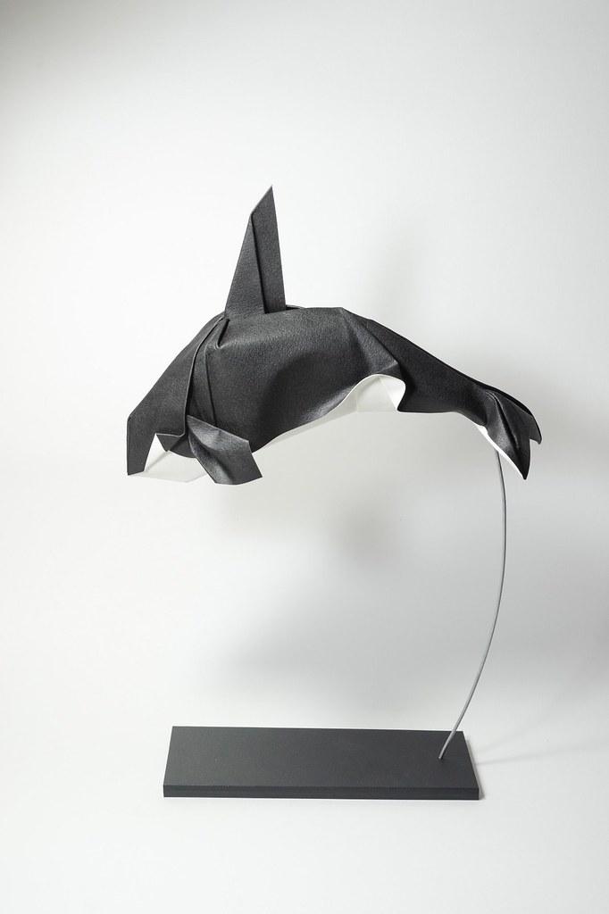 Killer Whale 2015 1