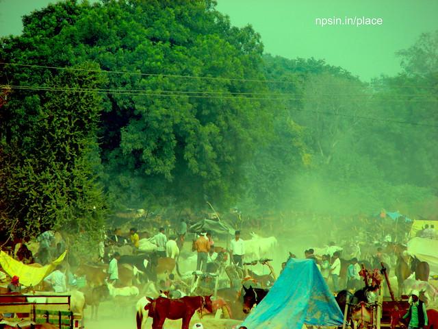 Animal Fair: Mules / Donkey Fair: Cloud of Sand