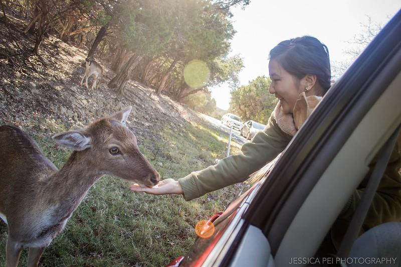 A Texan Wildlife Safari