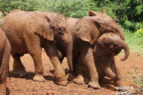 Afrika_Kenia_02_Nairobi_Elephant_Orphanage_Dez_2015 _053