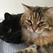 Katzen by Priska B.