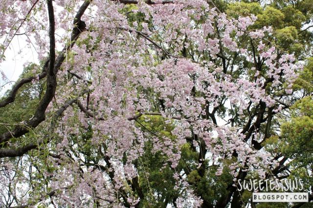 japan tokyo trip ueno park 27