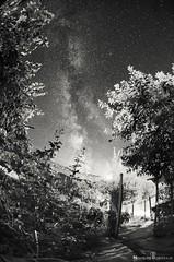 Backyard Milky Way